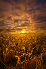 Beyond The Harvest (Phil~Koch) Tags: clouds travel journey life mood emotions country outdoors colors living heaven weather horizons sunrise lines landscape sun light field art meadow sky twilight horizon beam ray sunset wisconsin scenic vertical photography blue yellow office portrait serene morning dawn nature natural earth environment inspired inspirational season beautiful peace hope love joy dramatic unity trending popular canon camera rural fineart arts winter color wallart corn harvest farming