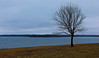 The Lonesome Jubilee (KC Mike D.) Tags: winter cloud cloudy blues cold tree branches lonely lonesome jubilee lake smithville missouri water frozen
