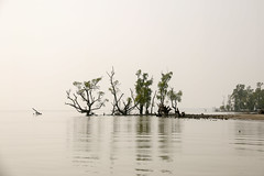 Sundarbans 2k16 (Labib Masud) Tags: select sundarbans rivers countryside forest jungle trees animals tigers birds ships beach waves sun sunlight people life