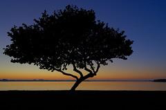 lone tree (paul noble photography) Tags: nikond7000 nikon florida birdkey lonetree sunrise goldenhour bluehour tree interestingness tokina1228f4 paulnoblephotography