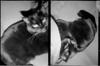 roll_170_023 (darbochrome) Tags: dianamini blackcat halfframe