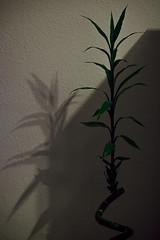 15/365 (galeneitor) Tags: planta sombra interior room shadow plant habitación green verde nikon d3100 1855mm 68mm project365 proyecto365