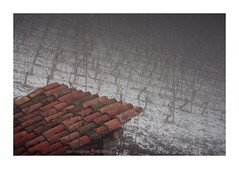 Red Grey (GP Camera) Tags: nikond7100 sigma1770contemporary red rosso grey grigio roof tetto tiles tegole vineyard vigneto snow neve fog nebbia mist foschia winter inverno shades sfumature textures trame silence silenzio calm calma quiet quiete solitude solitudine melancholy malinconia depthoffield profonditàdicampo vignetting details dettagli abstract astratto light luce shadows ombre lightandshadows lucieombre lighteffects effettidiluce whiteframe cornicebianca italy italia piemonte monferrato darktable gimp opensource freesoftware softwarelibero digitalprocessing elaborazionedigitale