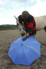 lz190604(118) (lotharlenz) Tags: mangalargamarchador louis julegaupp jule fürchten geländereiten regenschirm reportagegeländereiten caballo cavalo cheval equus häst hest hestur hobu horse konj lotharlenz paard pferd zirgs 56812dohr deutschland