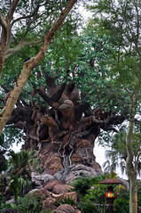Tree of Life - Animal Kingdom (fisherbray) Tags: fisherbray usa unitedstates florida orangecounty orlando baylake disney waltdisneyworld wdw disneyworld nikon d5000 animalkingdom themepark treeoflife