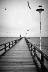 Zinnowitz (.martinjakab) Tags: blackandwhite bw monochrome schwarzweiss birds horizon vanishingpoint lines mecklenburgwestpomerania germany water wasser meer balticsea usedom seaside x100t fujifilm ngc