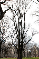 Central Park near the Band Shell -0056-February 19, 2017 (Scott Yeckes) Tags: nyc places winter bark centralpark centralparknyc leafless leaflesstrees spooky tangledbark trees