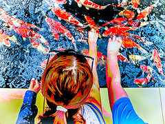 Feeding the koi (glukorizon) Tags: holiday fish animal garden vakantie pond hand view arm head nederland koi carp colourful tuin vis dier hdr highdynamicrange topview arcen kasteeltuinen limburg kleurrijk vijver posterization hoofd hss karper kleurig bovenaanzicht sliderssunday kleurvermindering
