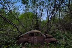 Volvo PV 544 - Bastnas Car Graveyard - Sweden (Jan Hoogendoorn) Tags: forest volvo sweden sverige bos zweden pv544 cargraveyard autokerkhof bastnas