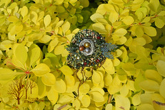 Forest nest_8 (~Gilven~) Tags: forest silver beads nest embroidery jewelry bead pearl beading broch beadembroidery japanesebeads czechbeads foggyforest naturalleather