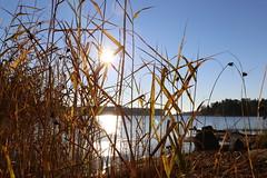 The warm sun of a cold cold morning (liisatuulia) Tags: autumn porkkala