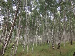 227/365 Zebra Forest, Amager