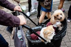 POOCH (Blonski Cruz) Tags: tokyo streetphoto pooch babydogs