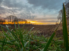 P1020096.jpg (Wizz4rrd) Tags: herbe grass champ field sunrise soleil outdoor extrieur