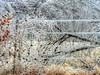 With a Bit of Ice (clarkcg photography) Tags: ice freezingrain oklahoma muskogee cold freeze trees downtrees fence icecoated wire icicles fencedfriday nikon nikoncoolpixp510