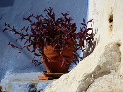 Wall and pot (Marite2007) Tags: symi islands dodecanese greece village pot flowers ornament architecture alley walls color