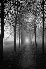 Exile on the Hill (XanderG5) Tags: blackandwhite path trees nature netherlands landscape fog gloomy ethereal art contrast