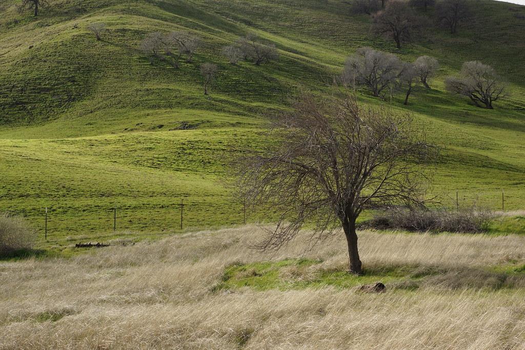 2017-01-19 Contra Loma Regional Park - Take 3 [#1]