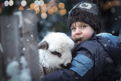 Adam and the lamb (iwona_podlasinska) Tags: child animal lamb sheep chiristmas snow winter portrait iwona podlasinska bokeh beautiful work