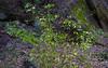 Mayfield Park December 2016 (43 of 1) (Rick Byrnes) Tags: olympus zuiko olympuszuiko madeinjapan 50mm tree plant greenbelt austin mayfieldpark december green