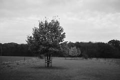 Trees (25/8) Tags: olympus trip35 adox cms20 adoteciii myvillage morenhoven