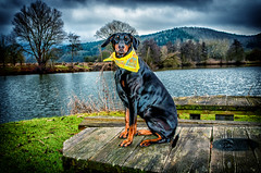 dobi (Mario Seidler) Tags: dobermann dog doglove dogslife outdoor sky landschaft landscape color