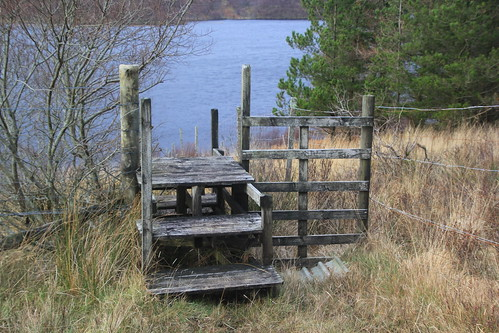 Over the Deer Fence, Highlands, Scotland.