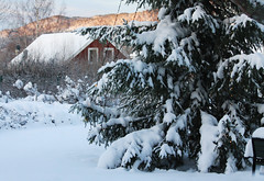Snow (Linnea from Sweden) Tags: canon eos 1100d efs 55250mm f456 456 winter tree house white