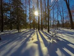 Winter Snow Sunset (Explore 01/13/17) (jason.betzner) Tags: williamsburg virginia wideangle hero4silver gopro nature outdoors outside helena winter gold white trees shadows sunset sun snow