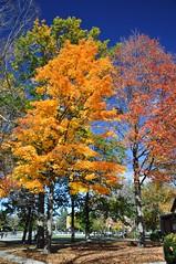 Taking Turns (cmu chem prof) Tags: mountpleasant isabellacounty michigan autumn fallcolor circularpolarizer centralmichiganuniversity mapletree