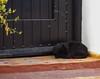 The lazy cat - Le chat paresseux (A.B.S Graph) Tags: maroc morocco bleu oudaya oudaia rabat medina kasbah doors door gnaoui gnawi legnawi art style ciel sky ruelle rue street sale salé rbat cat lazy