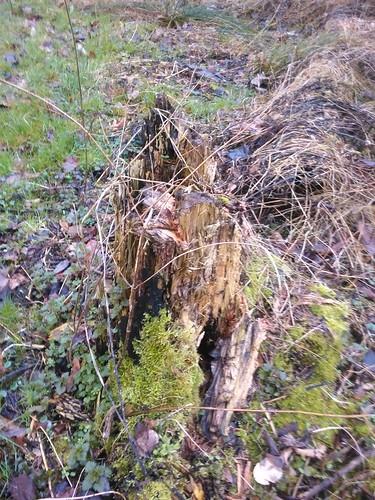 Special trunk in Malderen, Londerzeel.