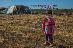 Home (Mohammad Alaa) Tags: life boy nikon hard egypt documentary lifestyle tent journalist bedouin nomadic d5100