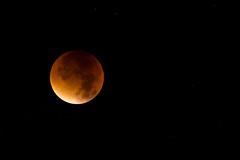 Mofi (Niklas Neubauer) Tags: eclipse nikon redmoon 200mm blutmond nikond810 mofi2015