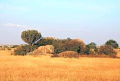 Tanzania (Serengeti National Park) Kopjes, the great granite mass, are an attractive feature of the Serengeti landscape