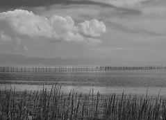 Omi-imazu shore (Tim Ravenscroft) Tags: cloud lake water japan fishing grasses nets biwa omiimazu