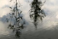Superposition Of Waves (gripspix (OFF)) Tags: reflection water wasser mud surface spiegelung schlamm ch4 greenhouseeffect oberfläche wavelet methan treibhauseffekt kleinewellen sapropel wellenringe faulschlamm 20151006 sumpfgas