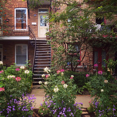 cleome row (placeinsun) Tags: street flowers houses summer architecture montral neighborhood villeray cleome