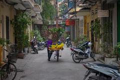 A Vietnamese Woman Carrying Flowers for Tet (New Year), Hanoi, Vietnam (takasphoto.com) Tags: world asia southeastasia earth vietnam hanoi asean indochina vitnam   wietnam vitnam  hni       vietnamas      cnghaxhichnghavitnam  ngnam     azjapoudniowowschodnia   vijetnam  mainlandsoutheastasia     hnuis        maritimesoutheastasia