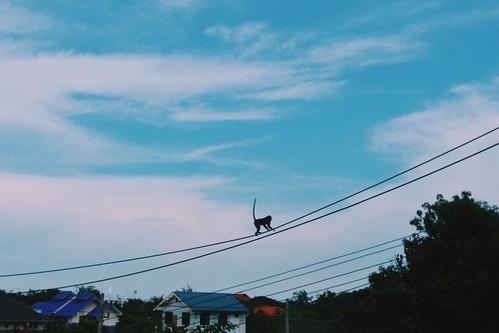 Hua Hin, Thailand, 15