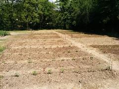 Orto di Abreer (2) (Comune di Reggio Nell'Emilia) Tags: reggioemilia ambiente orto urbani orti abreer