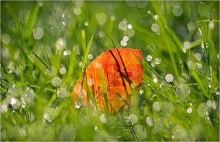 Herbst Tau