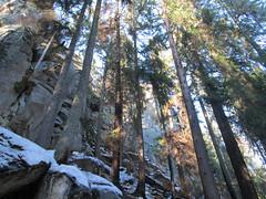 IMG_5410 (piragkov) Tags: travel snow mountains pine outdoors woods hiking weekend rocky ukraine explore rockymountains alpines snowmountains hikings горгани микуличин archypiragkov
