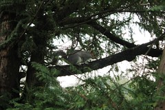 IMG_9319 (mconnor258) Tags: trees nature squirel naturephotography naturelandscape
