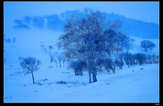 nEO_IMG_DP1U0998 (c0466art) Tags: world china trip morning travel blue trees winter cloud snow cold beautiful weather creek canon season landscape early photo scenery little grassland tone 2015  1dx