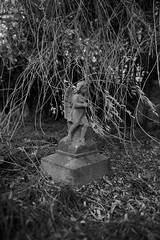 the grave of your Cyril Samuel (IanAWood) Tags: pinner londoncemeteries londonboroughofharrow walkingwithmynikon nikkorafs24mmf14g pinnercemetery nikondf
