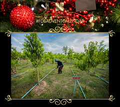 FDB ADVENT CALENDAR DAY 21 (Fragrance Du Bois) Tags: perfume sustainable teak plantations cites aquilaria