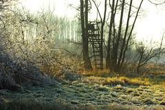 La forêt de l'Illwald en hiver (mamietherese1) Tags: phvalue