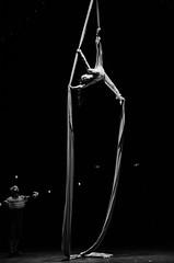 Te espero aquí abajo (olgapepe) Tags: circo circus gran fele valencia telas acróbata