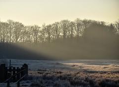 Wintermorning sun (Wim Scholte) Tags: katlikkerskar d750 nikon wimscholte winter netherlands fryslân landscape wildlife sun sigmacontemporary